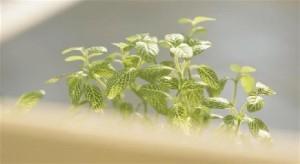 مجموعة صور و ديكورات نباتات بجانب النافذة